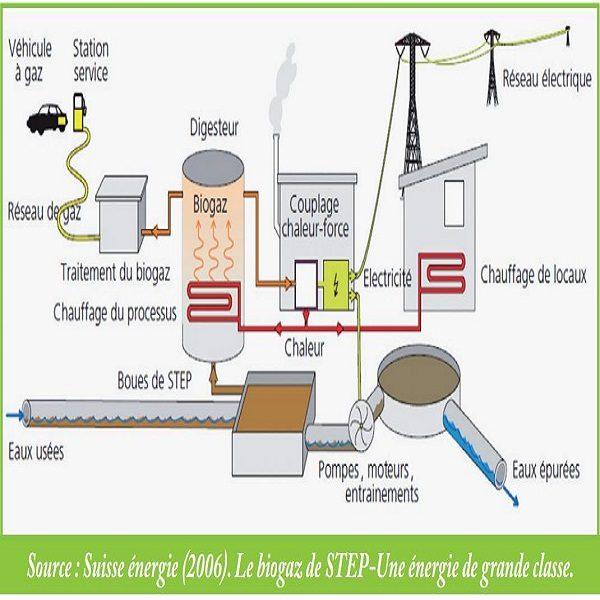 Biomasse : 1 000 MW