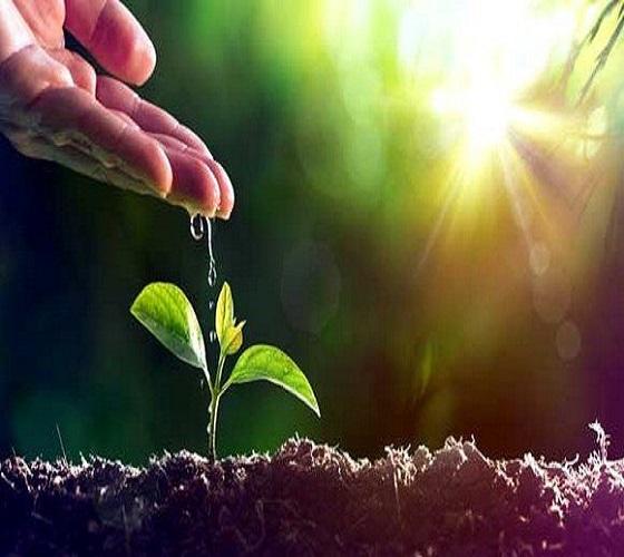 اقتصاد أخضر: الدعم المالي للحكومات لأصحاب المشاريع أمر ضروري