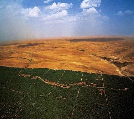 """السد الأخضر """"تجربة جزائرية رائدة"""" في مجال مكافحة التصحر"""