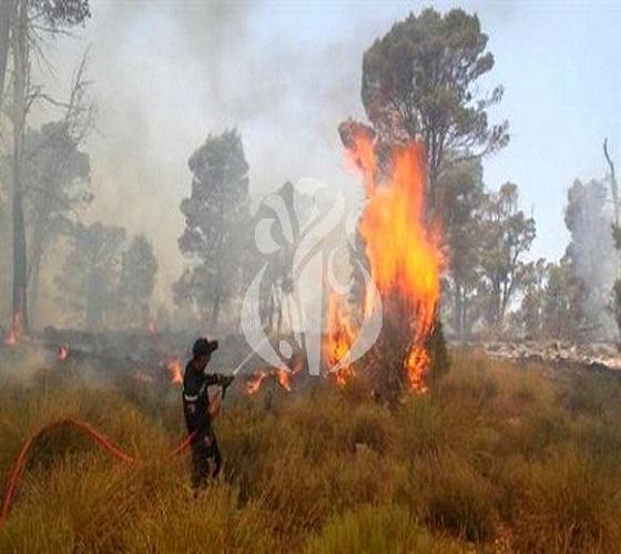 Conseil interministériel consacré à la lutte contre les feux de forêts