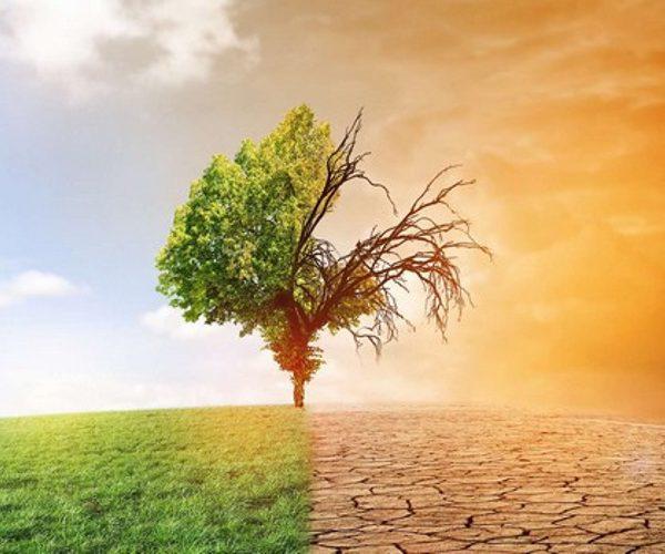 Changement climatique: un atelier pour le renforcement des capacités des pays africains à Alger