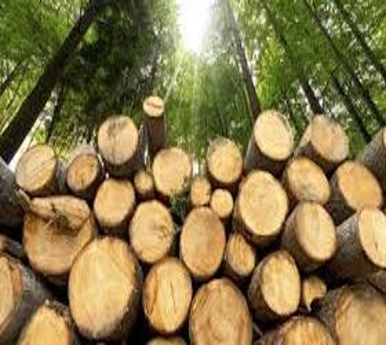 Filière bois et liège : Entre 4 et 7 millions d'euros/an d'exportations vers l'Europe