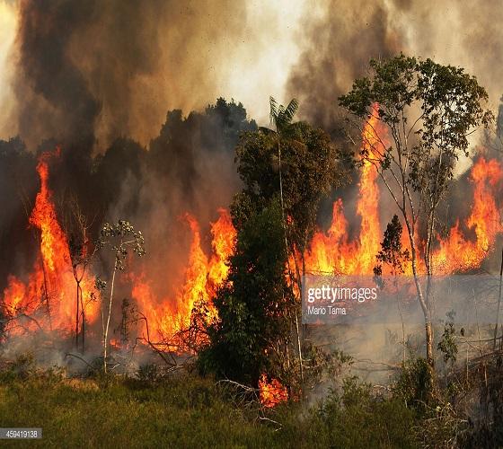 Le sommet sur l'Amazonie lancera un «appel mondial» pour sa protection