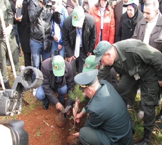 Programme national de reboisement : Plantation de 43 millions d'arbres