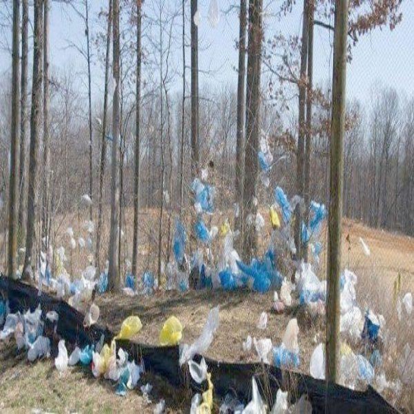 Lutte contre la pollution plastique : Lancement d'une campagne en milieu scolaire à Constantine