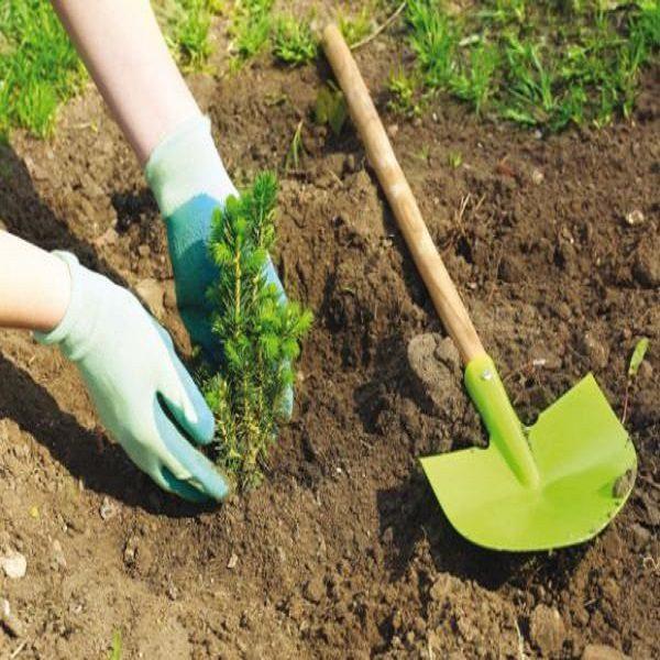 ENVIRONNEMENT – Plantation de 43 millions d'arbres :Le programme national lancé !