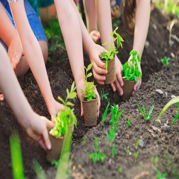 Reboisement: renouvellement du couvert végétal endommagé par les incendies