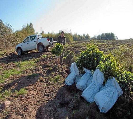 Campagne de reboisement : Place aux arbres du terroir