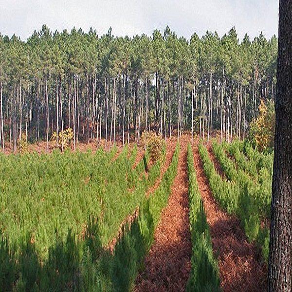Une forte mobilisation relevée cette année : Reconstituer les milliers d'hectares