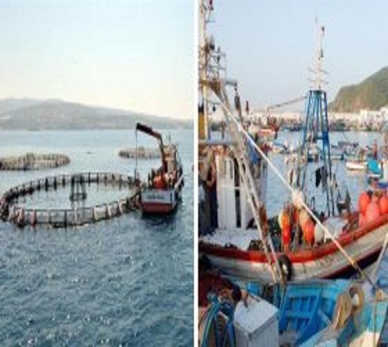 إرادة قوية في الجزائر لتطوير قطاع الصيد البحري وتربية المائيات