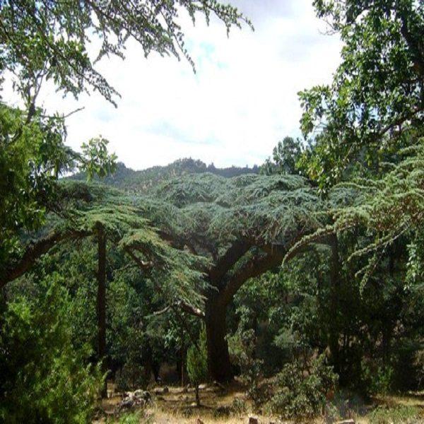 البرنامج الوطني للتشجير تثمين للغابات الجزائرية وتعزيز لثرواتها