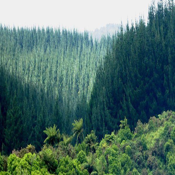 المخطط الوطني للتشجير وإعادة بعث السد الأخضر ينطوي على أبعاد إستراتيجية هامة