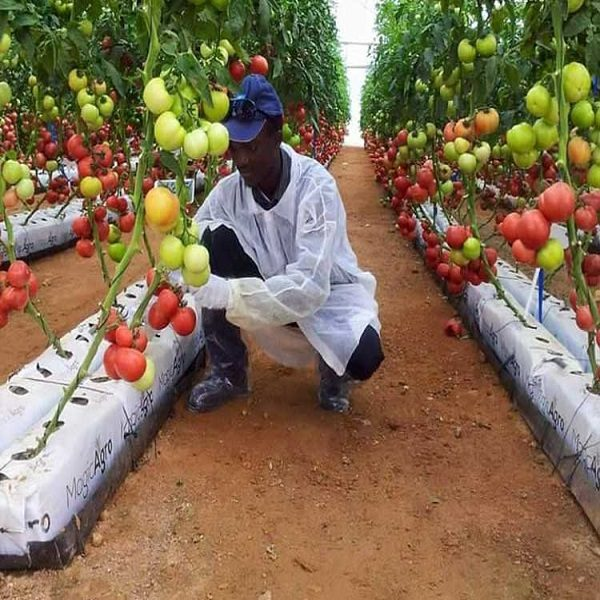 Agriculture : Comment nourrir une Afrique qui se réchauffe ?