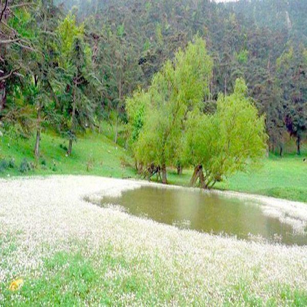 المخيم الإيكولوجي بتسمسيلت وعي بيئي وسلوك حضاري بالحظيرة الوطنية للأرز