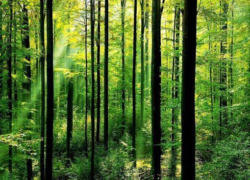 Les forêts de Guelma, une échappatoire pour les familles face à la chaleur
