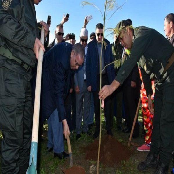 Programme national de reboisement: près de 2 millions d'arbustes plantés