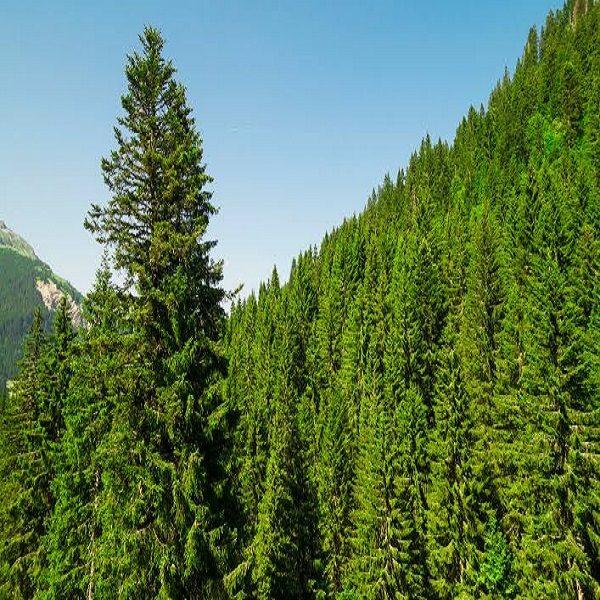 Embellissement de la capitale : Création de 5 nouvelles forêts récréatives