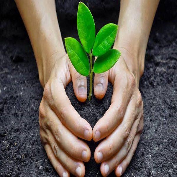 تشمل تربية النحل وإنتاج الفلّين والزيوت النباتية :مديرية الغابات للعاصمة تفتح مجال الاستثمار للشباب في الغطاء الأخضر