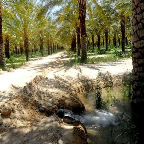 PROTECTION CONTRE LES INONDATIONS DE L'OASIS FOURNASSA (NÂAMA) :12 millions de dinars mobilisés