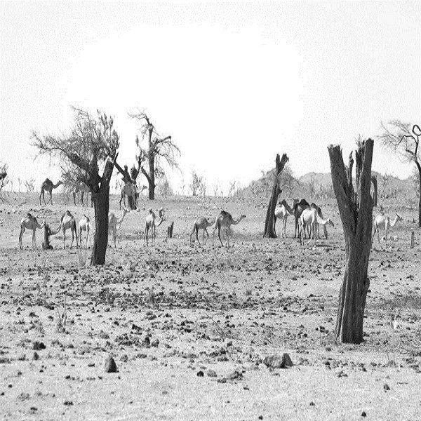 Lutte contre le changement climatique : l'Algérie classée à la 47e place