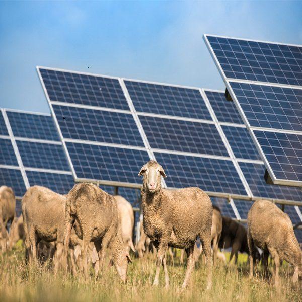 Sud et hauts-plateaux: une feuille de route dédiée à l'accès énergétique durable