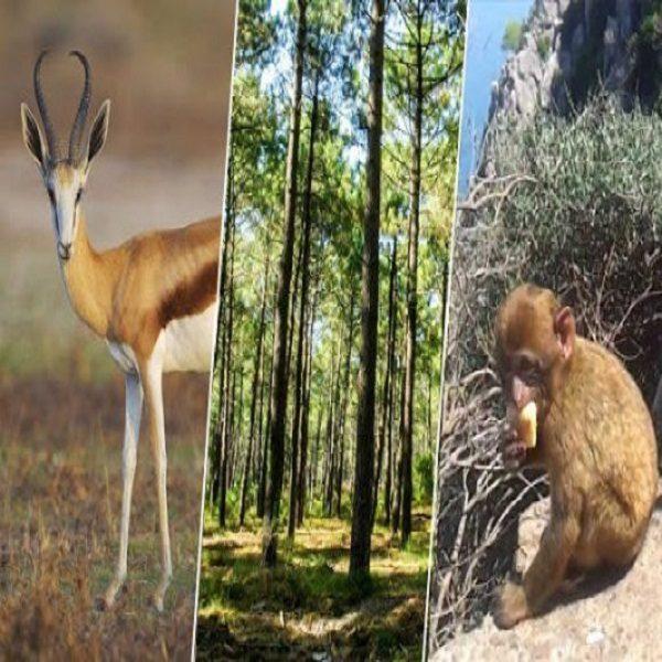 Environnement : nécessité d'assurer une gestion écosystémique des milieux naturels