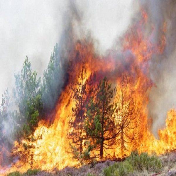 إغلاق الشواطئ يزيد من الضغط على الفضاءات الغابية و يرفع من مخاطر الحرائق