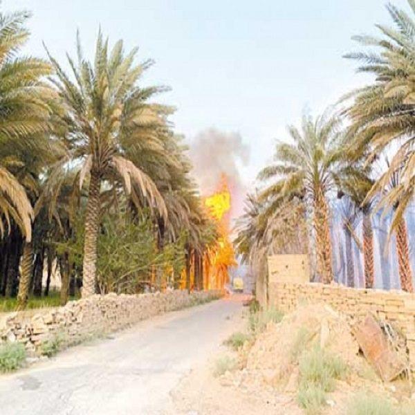 خسارة 1403 نخلة في السداسي الأول 2020: الحرائق والإهمال يُهددان مستقبل إنتاج التمور بورقلة