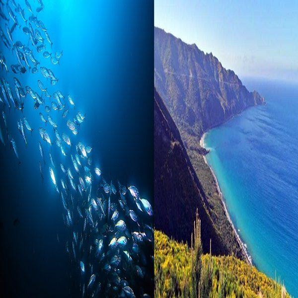 Pêche/Environnement: installation d'un comité de coopération conjoint