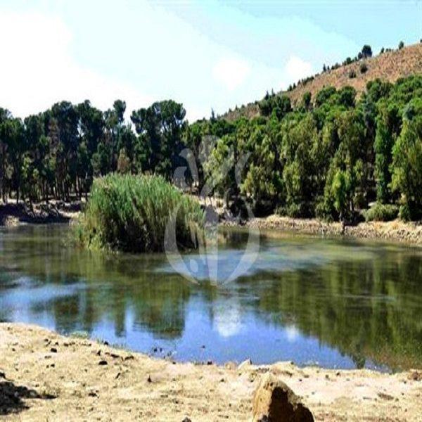 قسنطينة: إطلاق حملة تحسيسية لحماية الثروة الغابية