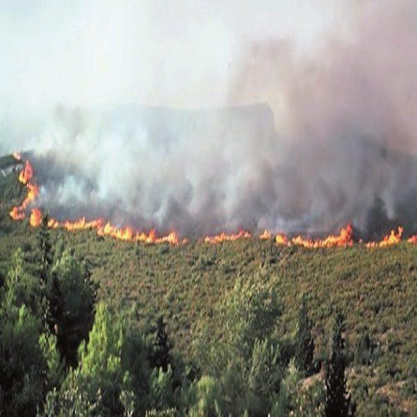 Chlef : Une série d'incendies de forêt sur le littoral