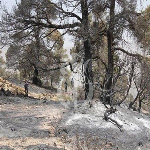 غابات : الحرائق تتلف 9165 هكتار إلى غاية الاثنين الماضي