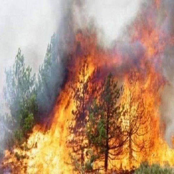 """فدرالية عمال الغابات تستنكر """"التخريب الممنهج"""" للثروة الغابية"""
