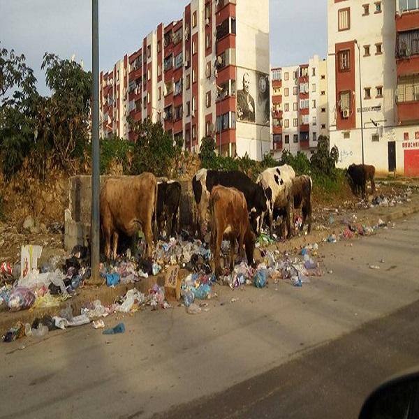 Sidi Amar (Annaba) : La commune croule sous les ordures