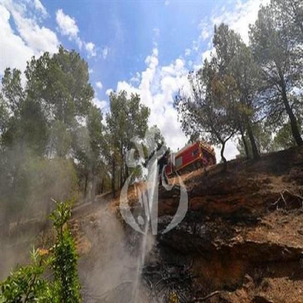 Feux de forêts: Tipasa a enregistré le plus lourd bilan depuis 2010