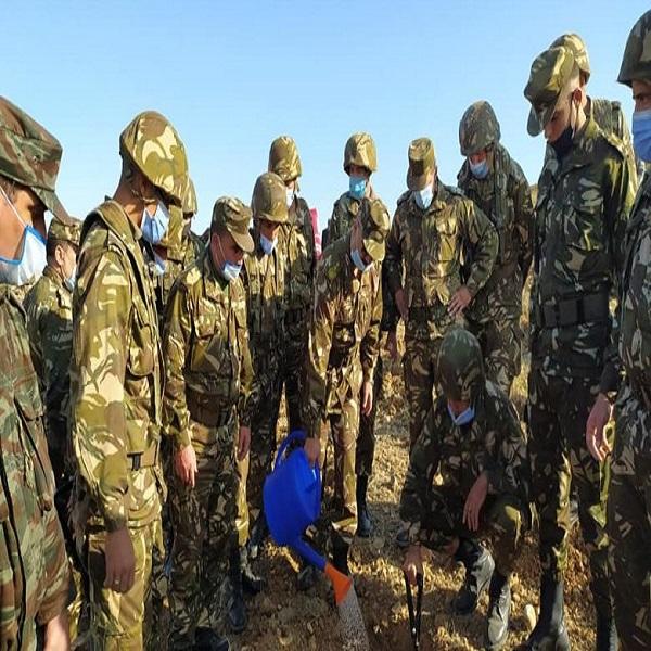 بالناحية العسكرية الأولى مشاركة واسعة لأفراد الجيش في عمليات التشجير