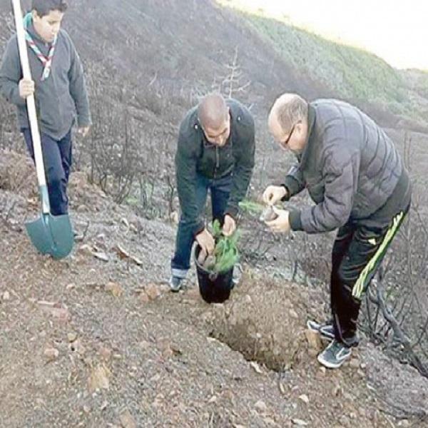 بين حملات التشجير والحرائق بلدية بودواو تشرع في إعادة غرس المساحات الغابية