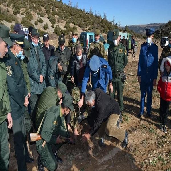 L'ANP participe à la campagne de reboisement à Batna