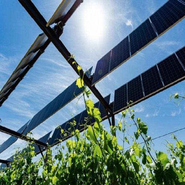 Energie: généraliser l'électricité solaire dans le secteur agricole