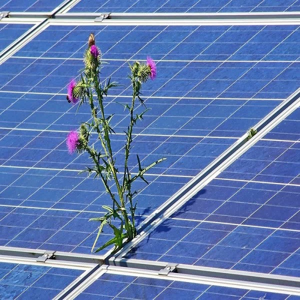 Le CEREFE appelle à élargir l'utilisation du solaire: L'autoconsommation, un meilleur soutien pour l'économie