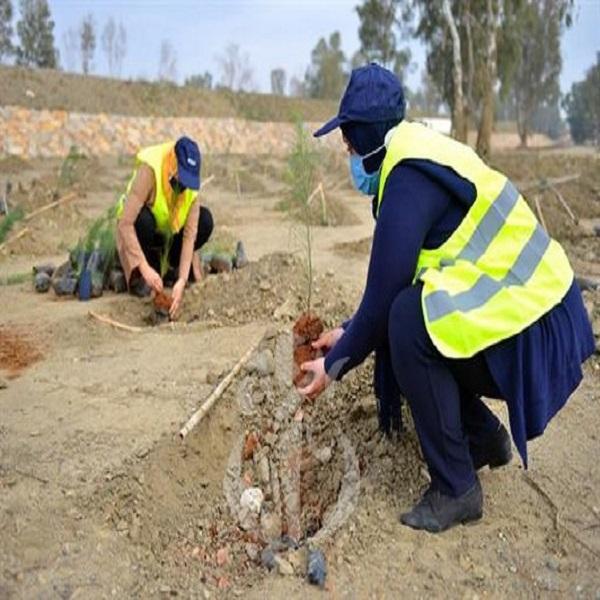 Plus de 300.000 arbres plantés à Alger dans le cadre du programme national de reboisement