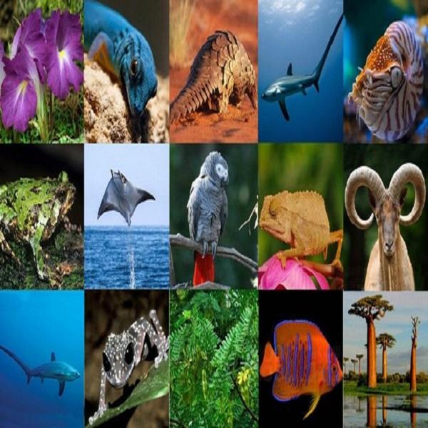 Faune: une loi relative à la Convention CITES pour préserver les espèces menacées en cours d'élaboration
