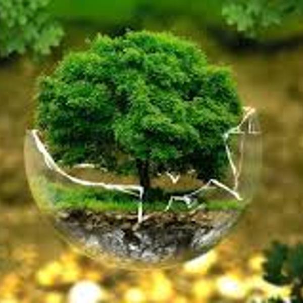 الانتقال الايكولوجي : مشروع ذي أولوية لتطوير نشاطات الاقتصاد الأخضر