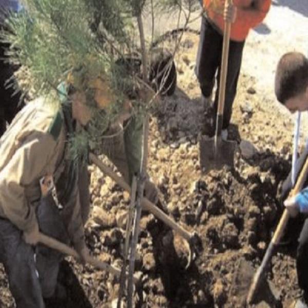 حسبما أعلن عنه محافظ الغابات لولاية الجزائر: غرس أكثر من 300.000 شجرة بالجزائر العاصمة في إطار البرنامج الوطني لإعادة التشجير