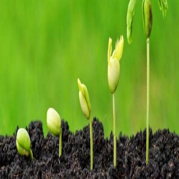 حماية الثروة الجينية النباتية من التغيرات المناخي