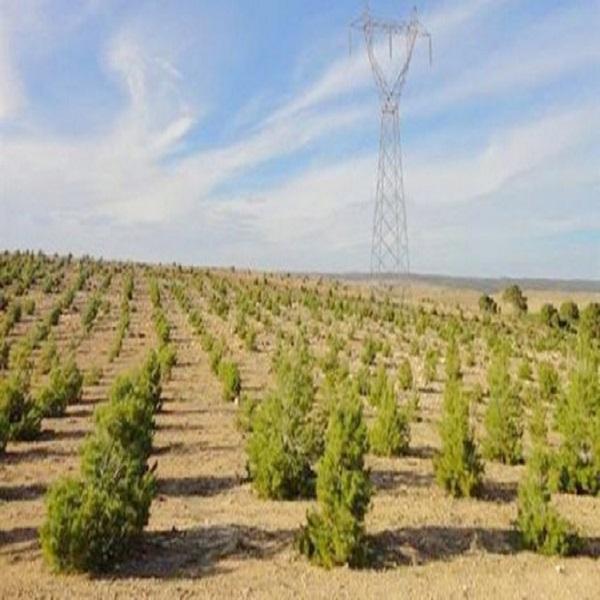 تنصيب هيئة وطنية للتنسيق و مكافحة التصحر و تجديد السد الأخضر قريبا