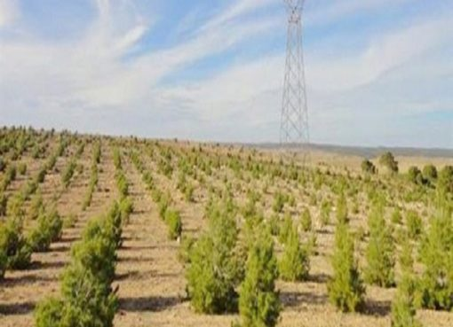 L'organe de coordination pour la lutte contre la désertification et la relance du barrage vert prochainement installé